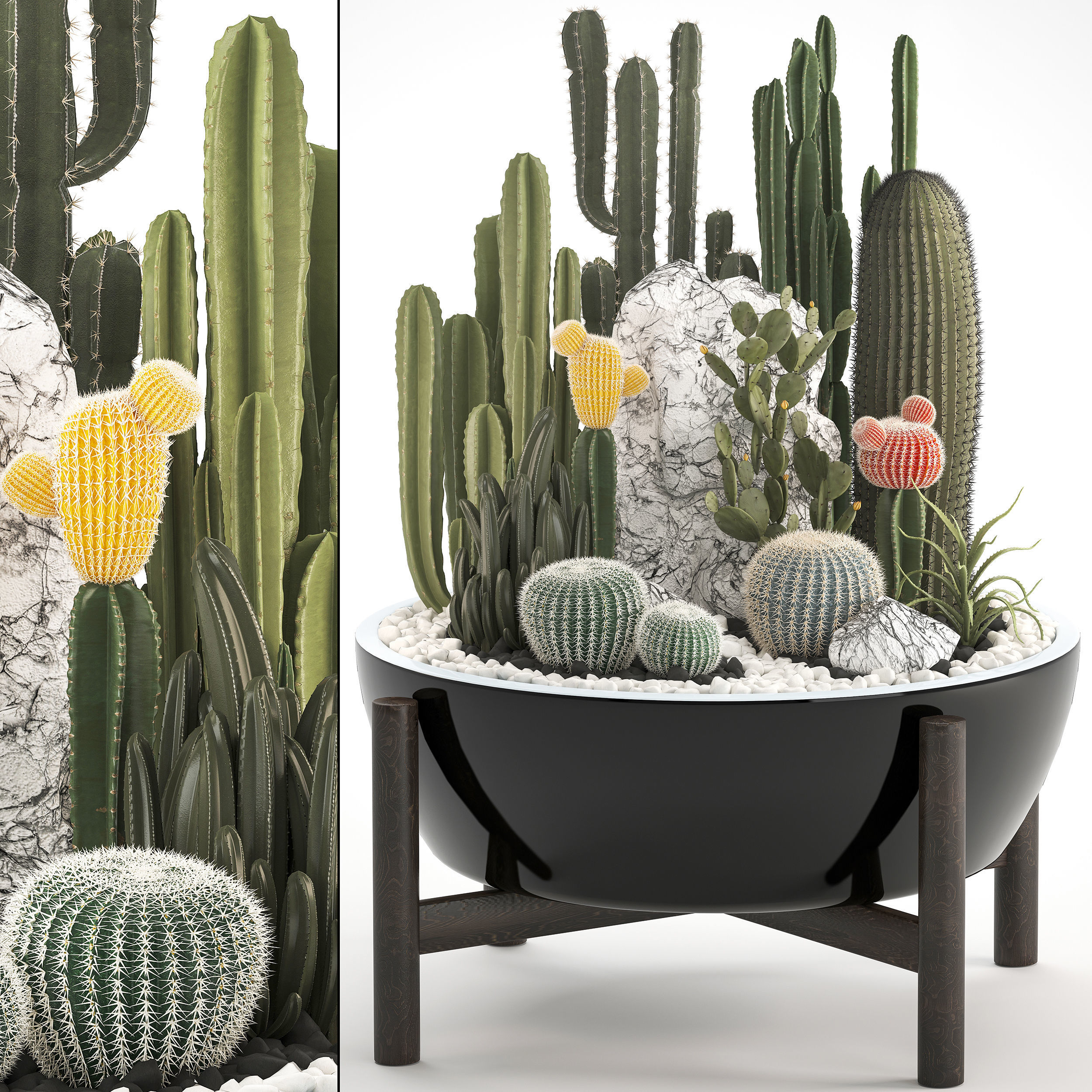 Collection of Exotic Cactus Plants 6