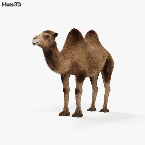 camel hd 3d model max obj mtl 3ds fbx c4d lwo lw lws 1