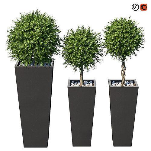 plant in the pot i 3d model max obj mtl 1