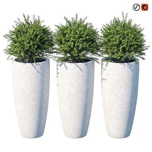 plant in the pot iii 3d model max obj mtl 1
