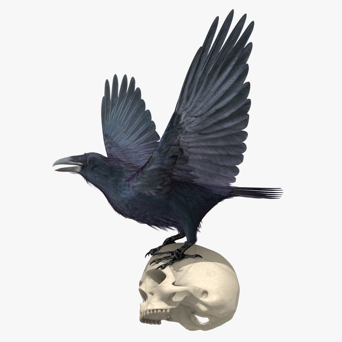 Common Raven - rigged - animated