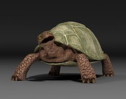rigged turtle escapefromparadise animal 3d model