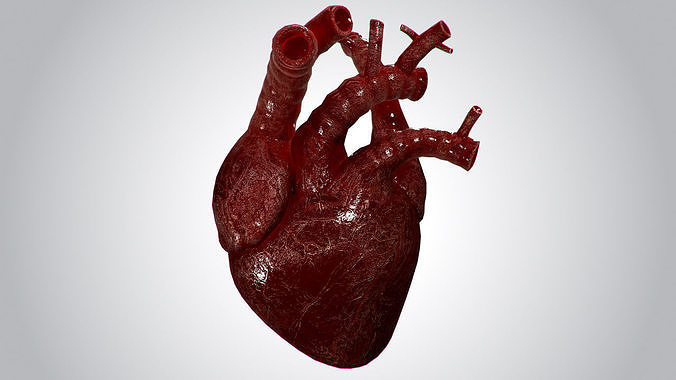 heart overblooded rigged animated pbr 3d model max obj mtl fbx 1