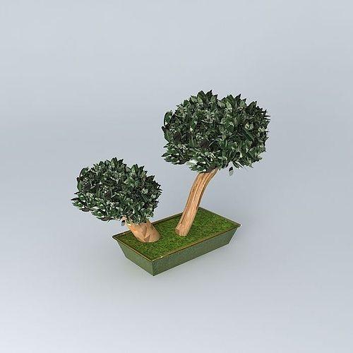 Parvifolia Stabilized Plant Bonsai Eucalyptus Green 2 Heads 3d Model Max Obj 3ds Fbx Stl Dae