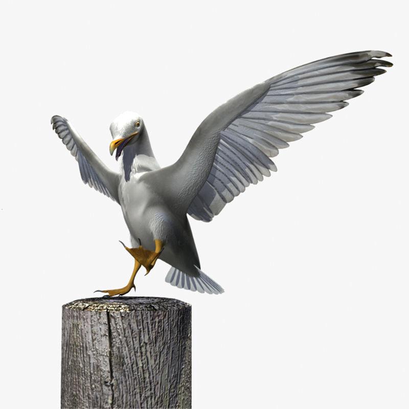 Thayers Herring Gull -rigged - animated