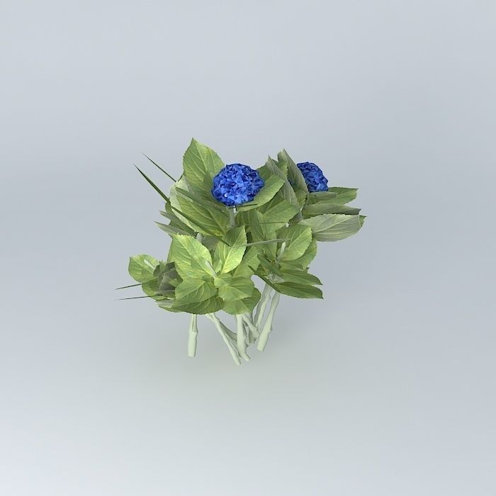 3d hortensia hydrangea hydrangea macrophyl 3d model max for Plante arbuste