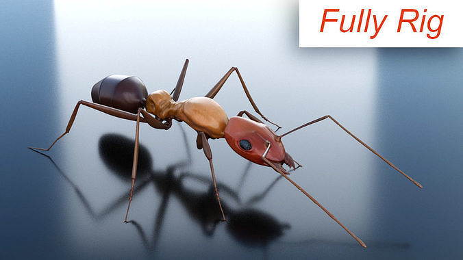 Ant 3D Rig
