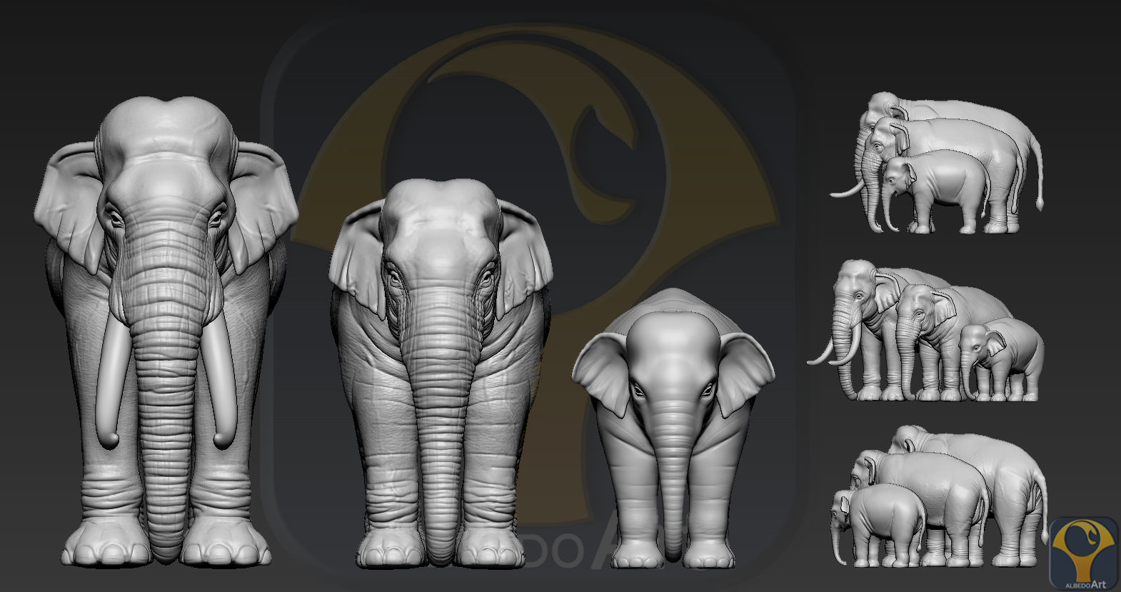 Elephant asian
