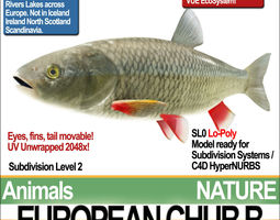 european chub b 3d model obj 3ds c4d vue