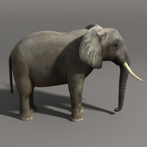 Elephant And Rhino 3D Model Game Ready .max .obj .fbx