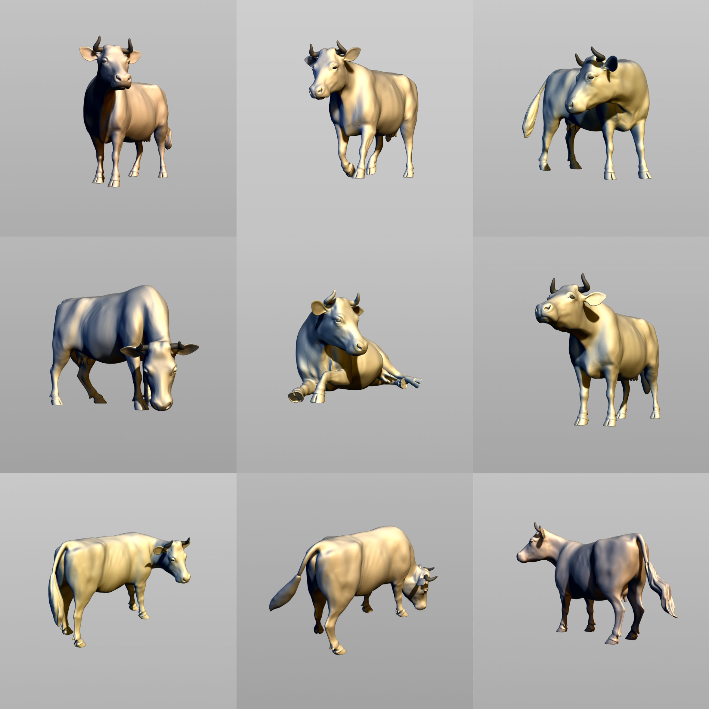 Cows in six poses