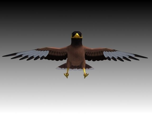 3D model Maynah Bird folded wings VR / AR / low-poly rigged MAX FBX ...