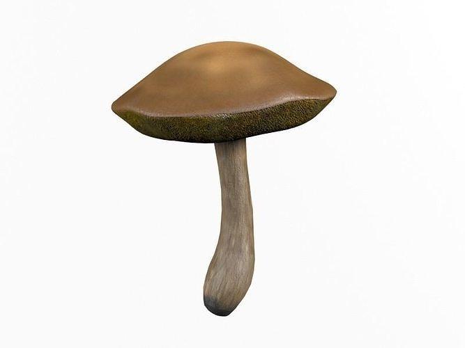 mushroom Xerocomus