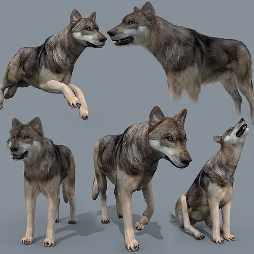 My Wolf - 3d animated wolf model