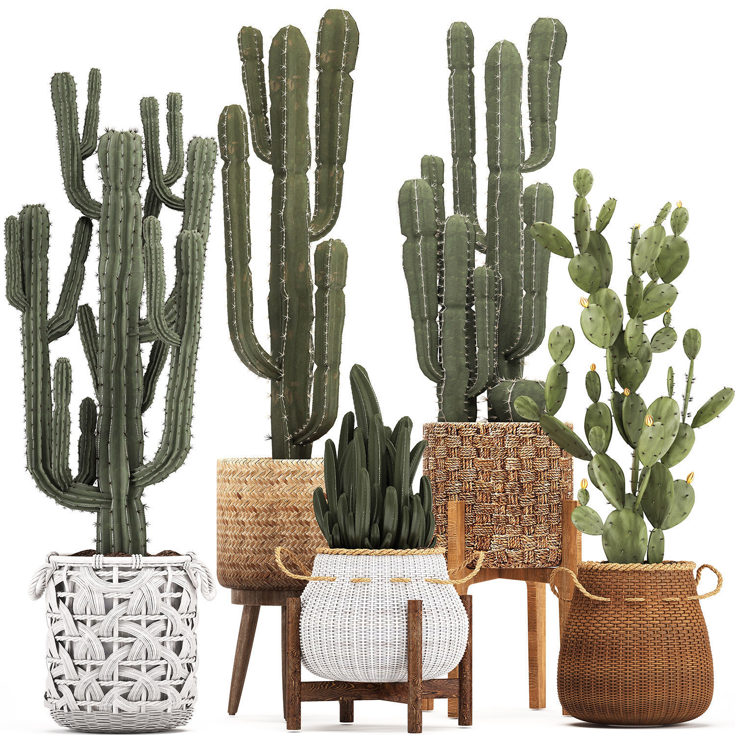 Collection of Exotic Cactus Plants 12