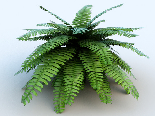 Fern # 1 3D Model .max .obj .3ds .fbx