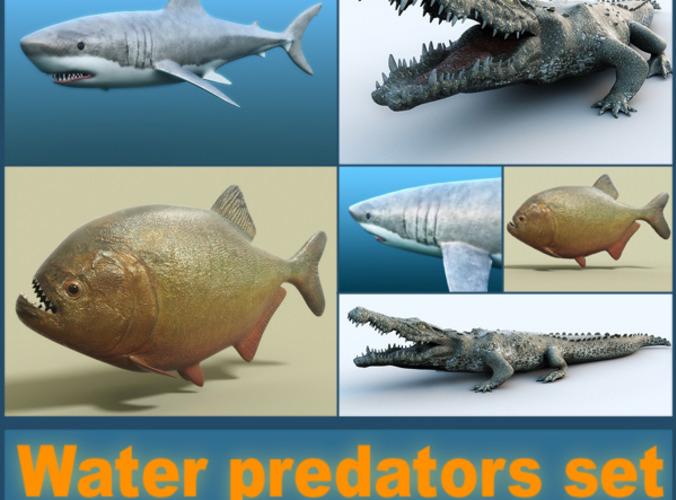 Water predators collection3D model