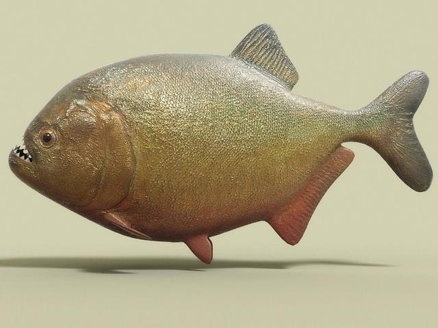 Piranha fish 3D Model .max .obj .3ds .fbx