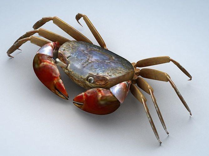 Ilyoplax pingi crab