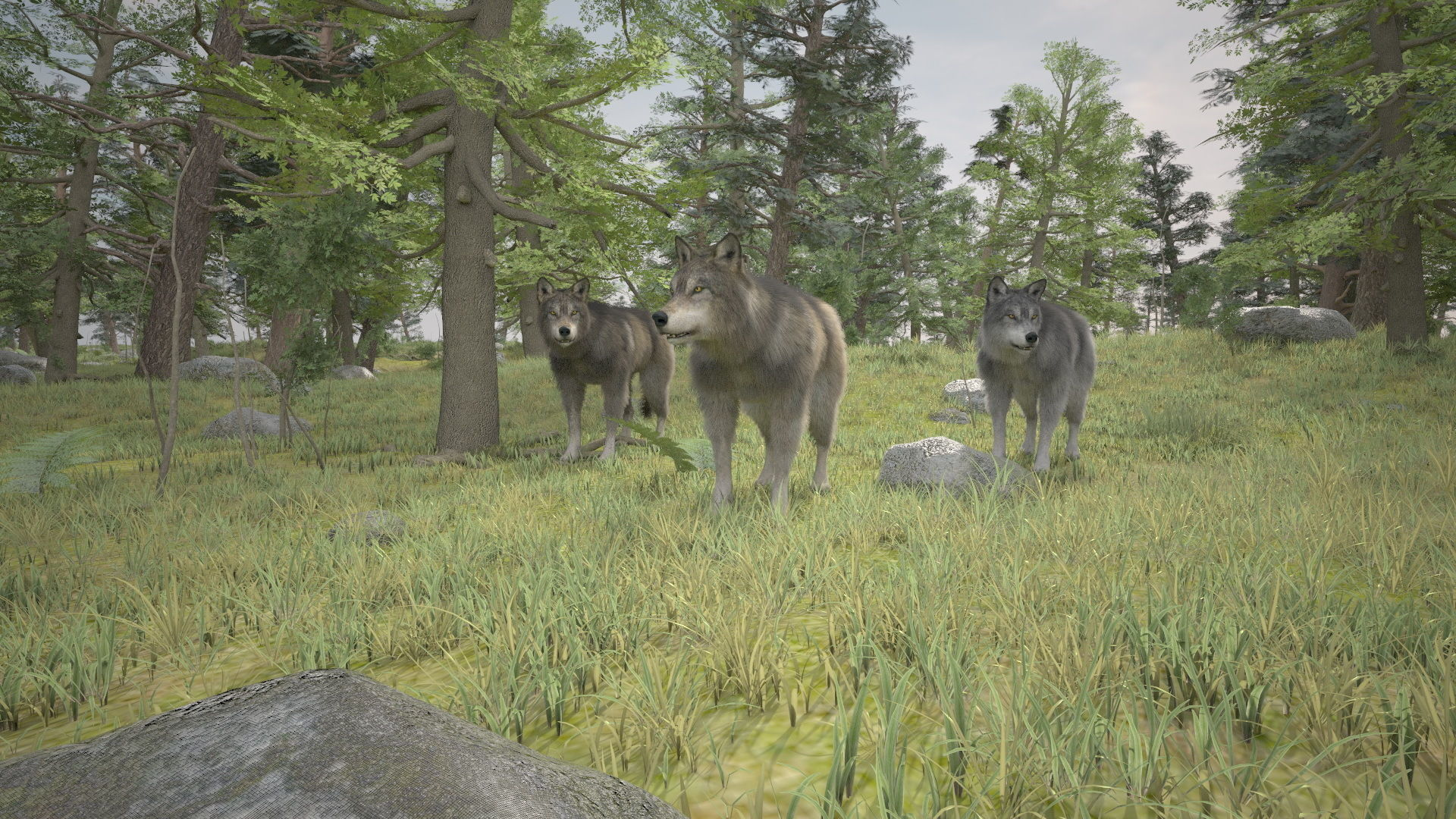 3D forest wolfs rigged
