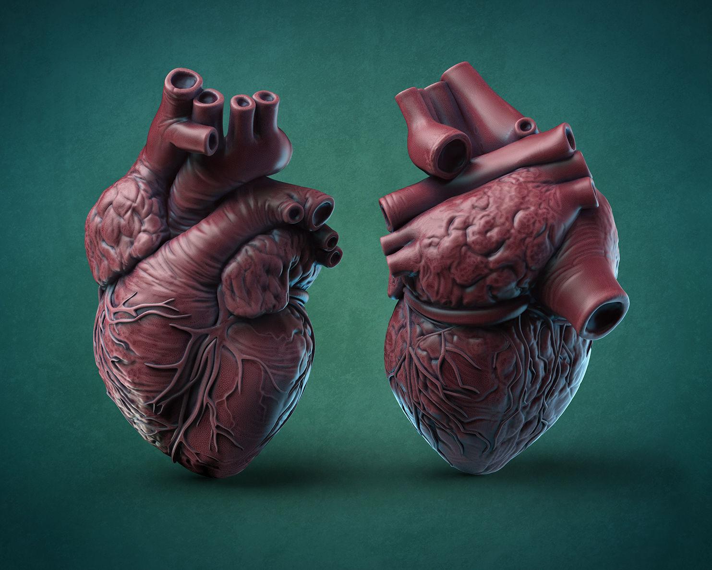 Humans Heart