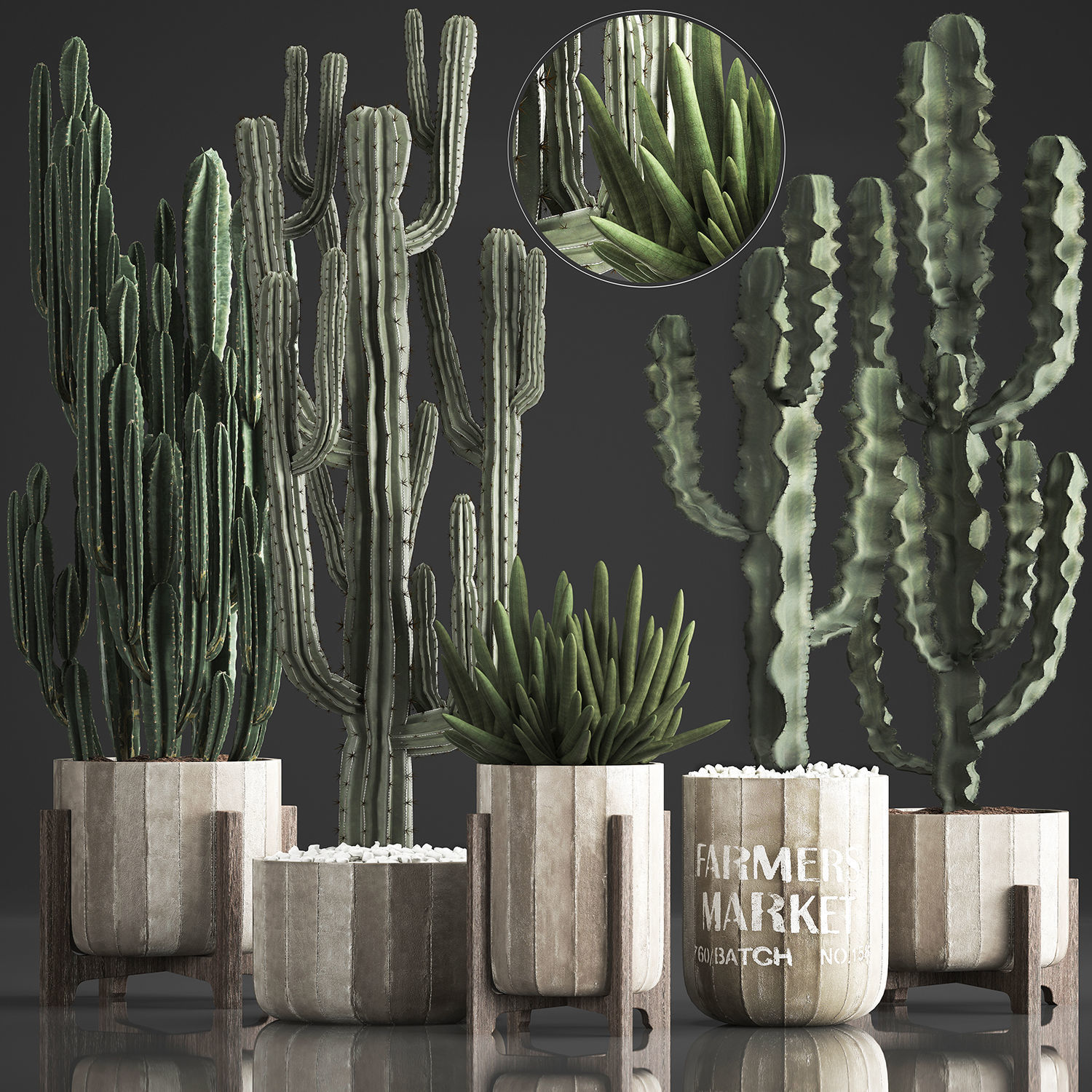 Collection of Exotic Cactus Plants 374