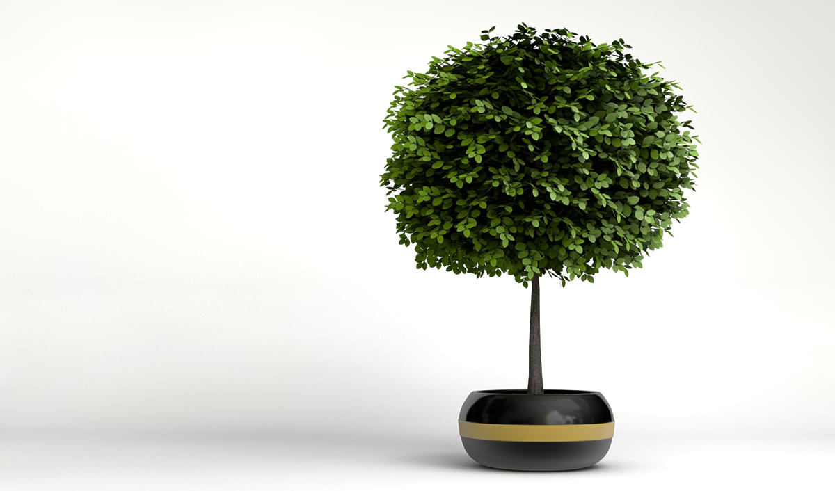 Small decorative tree 2 3d models for Short trees