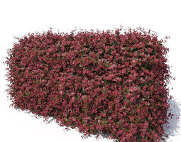 Barberry Hedge 3D model