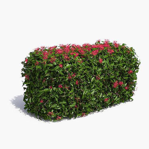 jungle geranium hedge flowering 3d model max obj mtl mat 1