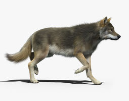 Gray Wolf 2 FUR ANIMATED 3D Model
