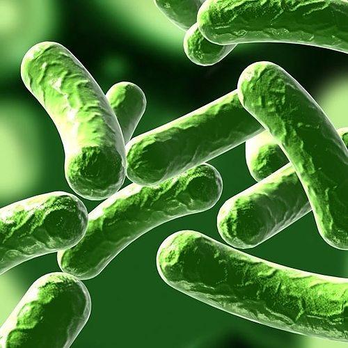 bacillus 01 3d model max obj mtl fbx 1
