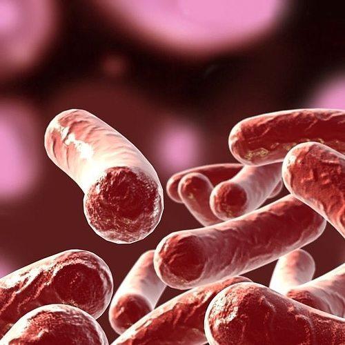 bacillus 02 3d model max obj mtl fbx 1