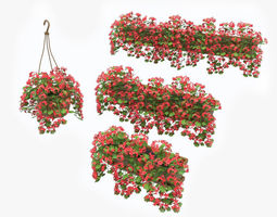 Pelargonium box flower 3D