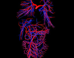Inner body blood vessels 3D Model