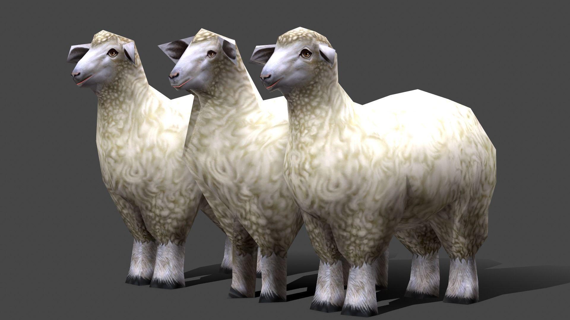 Sheep - - Low poly Animal