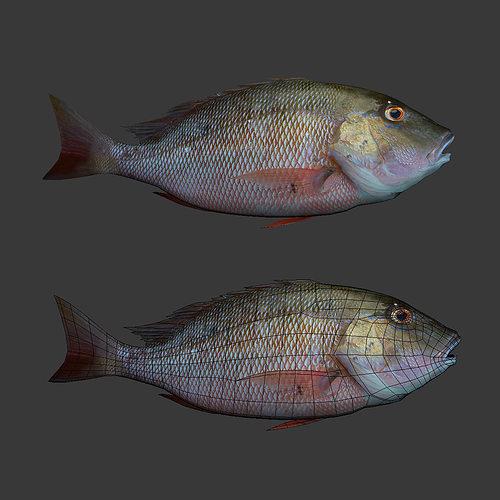 fishs 3d model obj mtl 1
