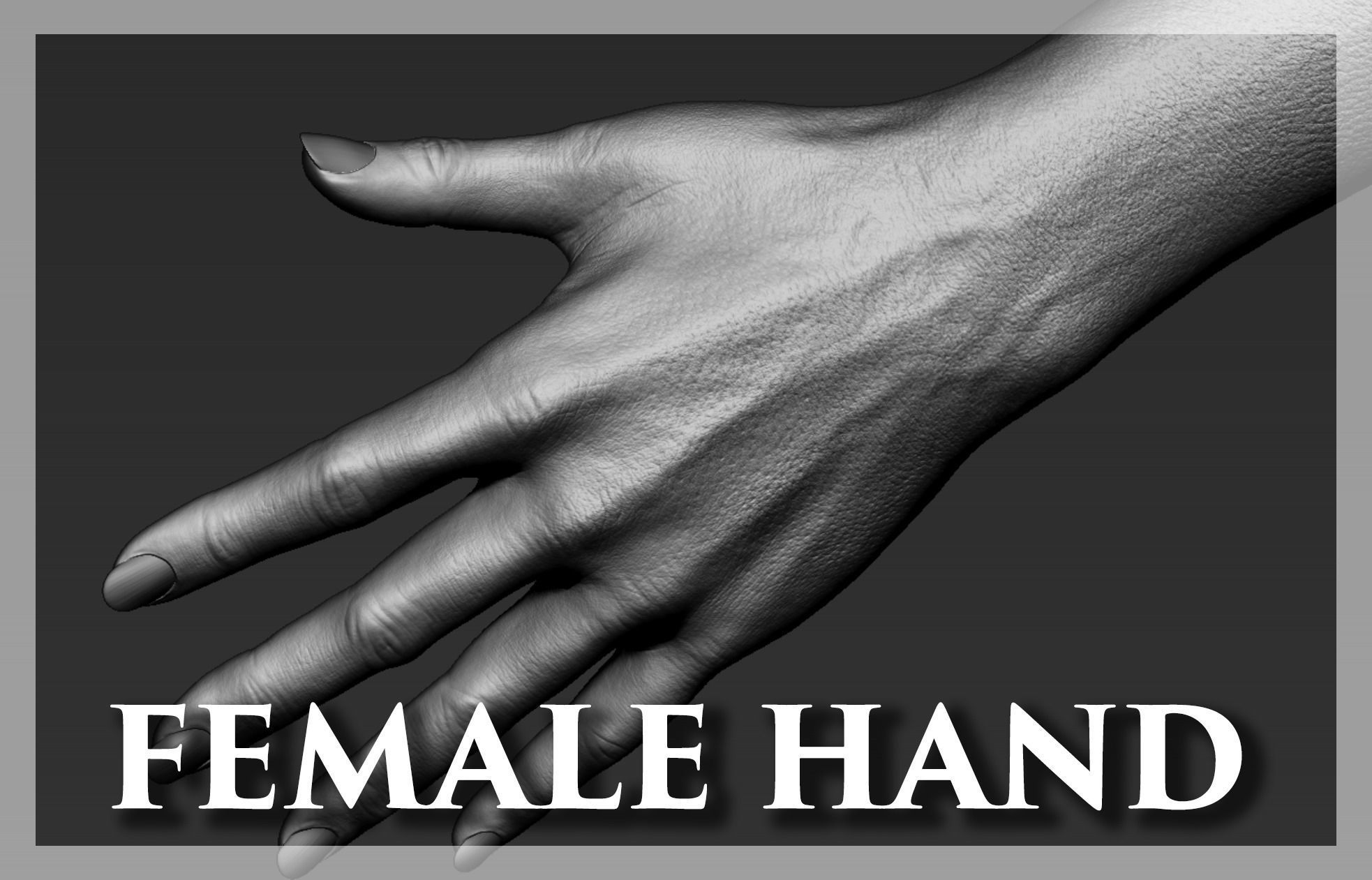 Female Hand Realistic