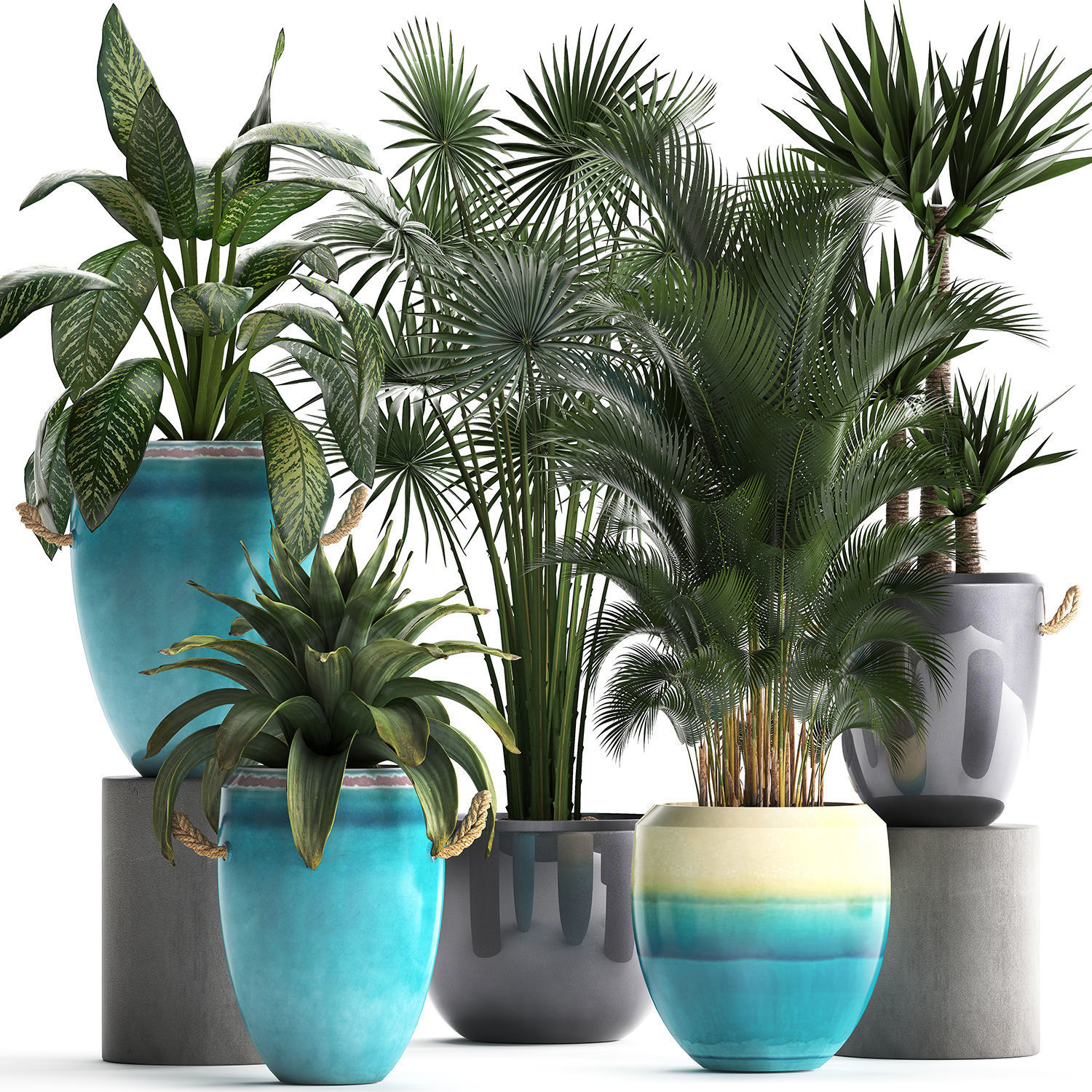 Collection of Exotic Plants 394