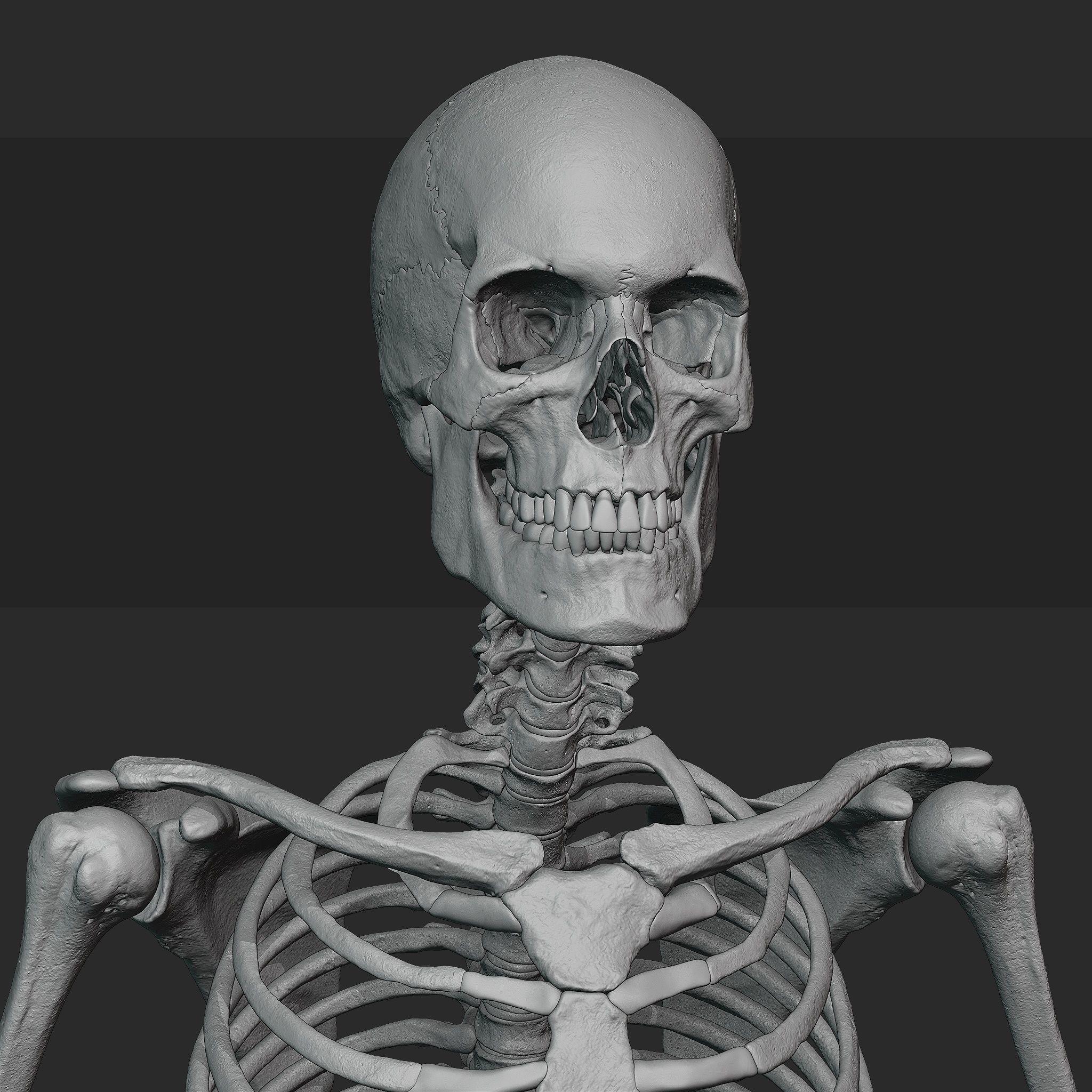 Male skeleton sculpt