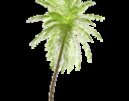 by 3D model Palm tree