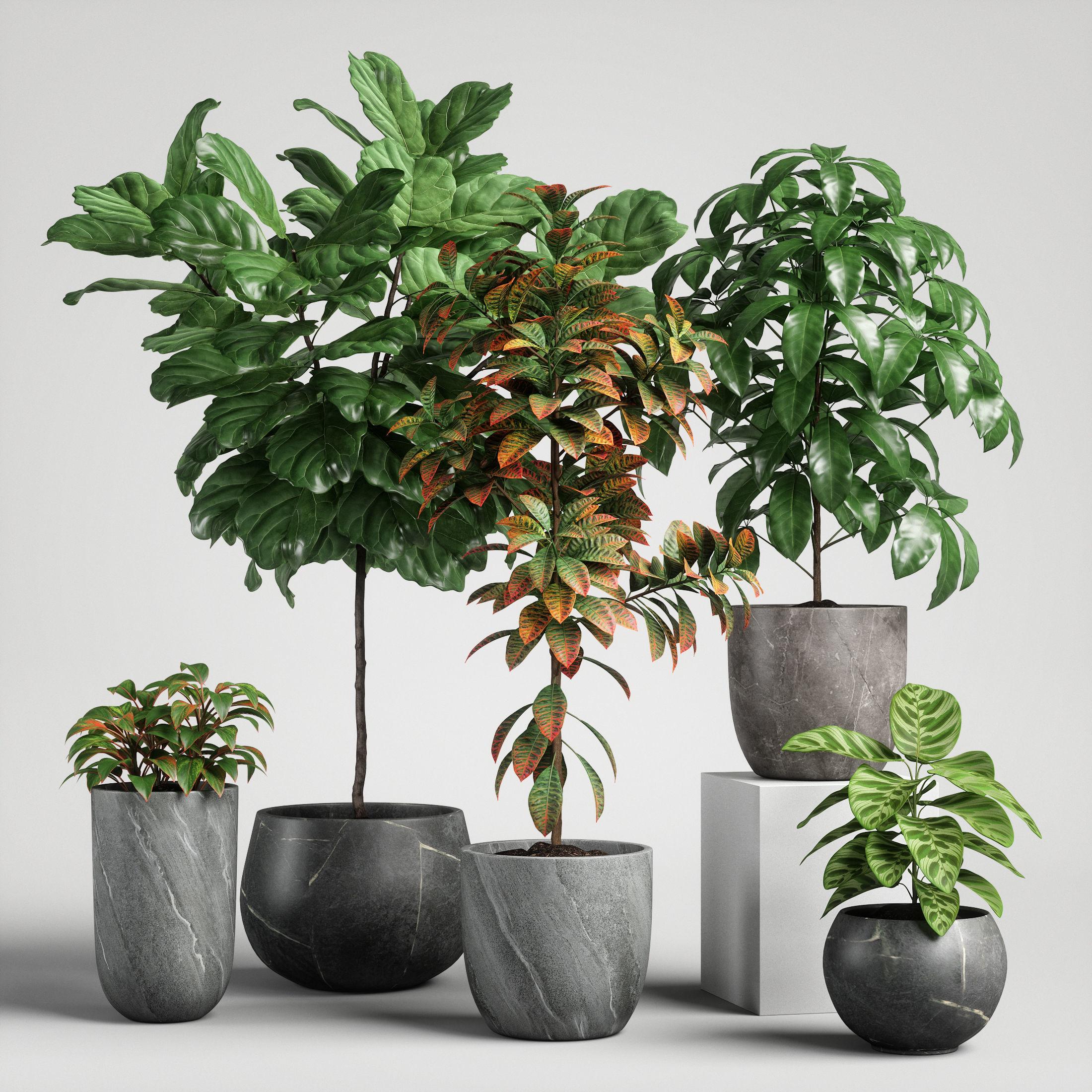 plants set 11