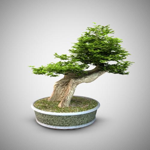 Bonsai tree 33D model