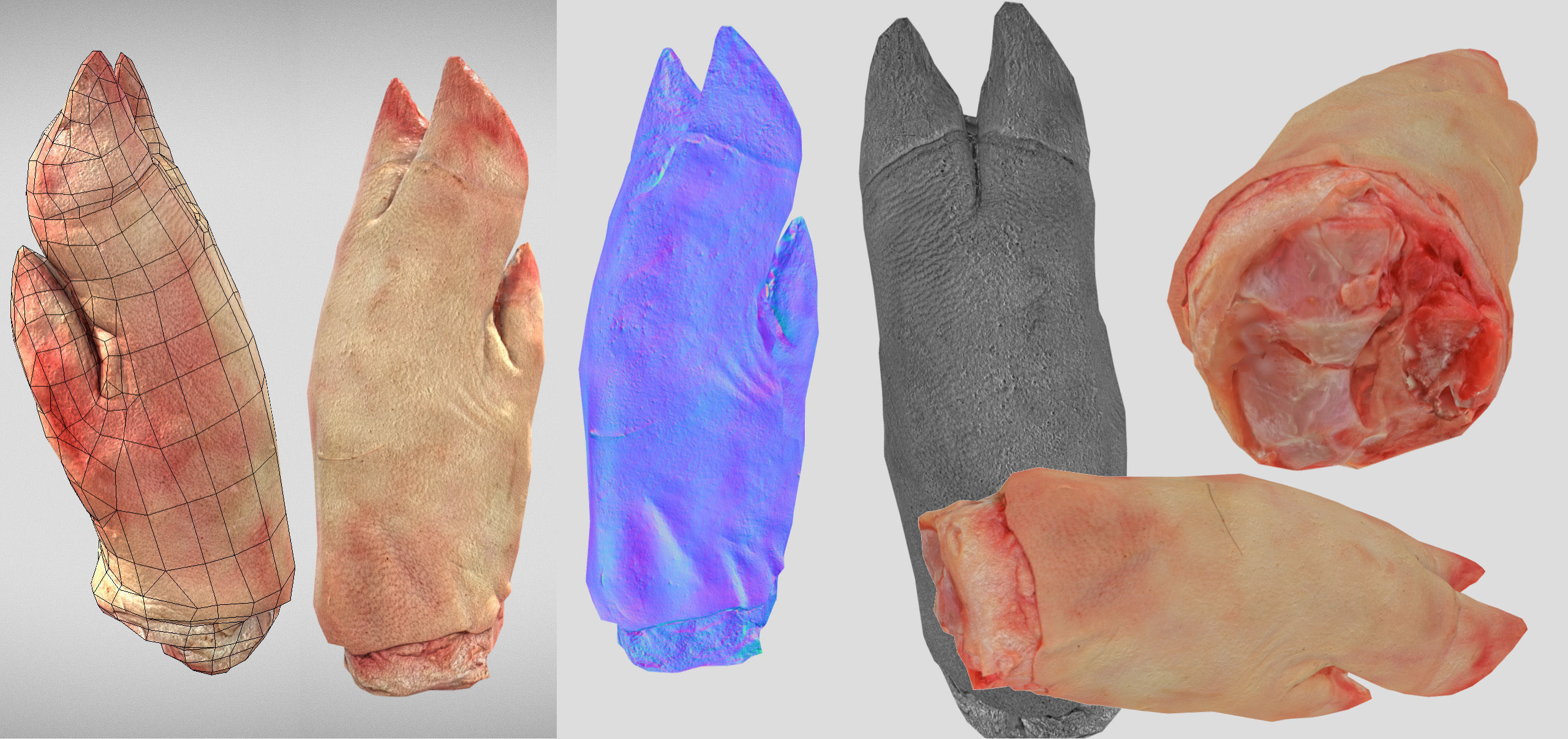 Raw Pigs leg 3D scan