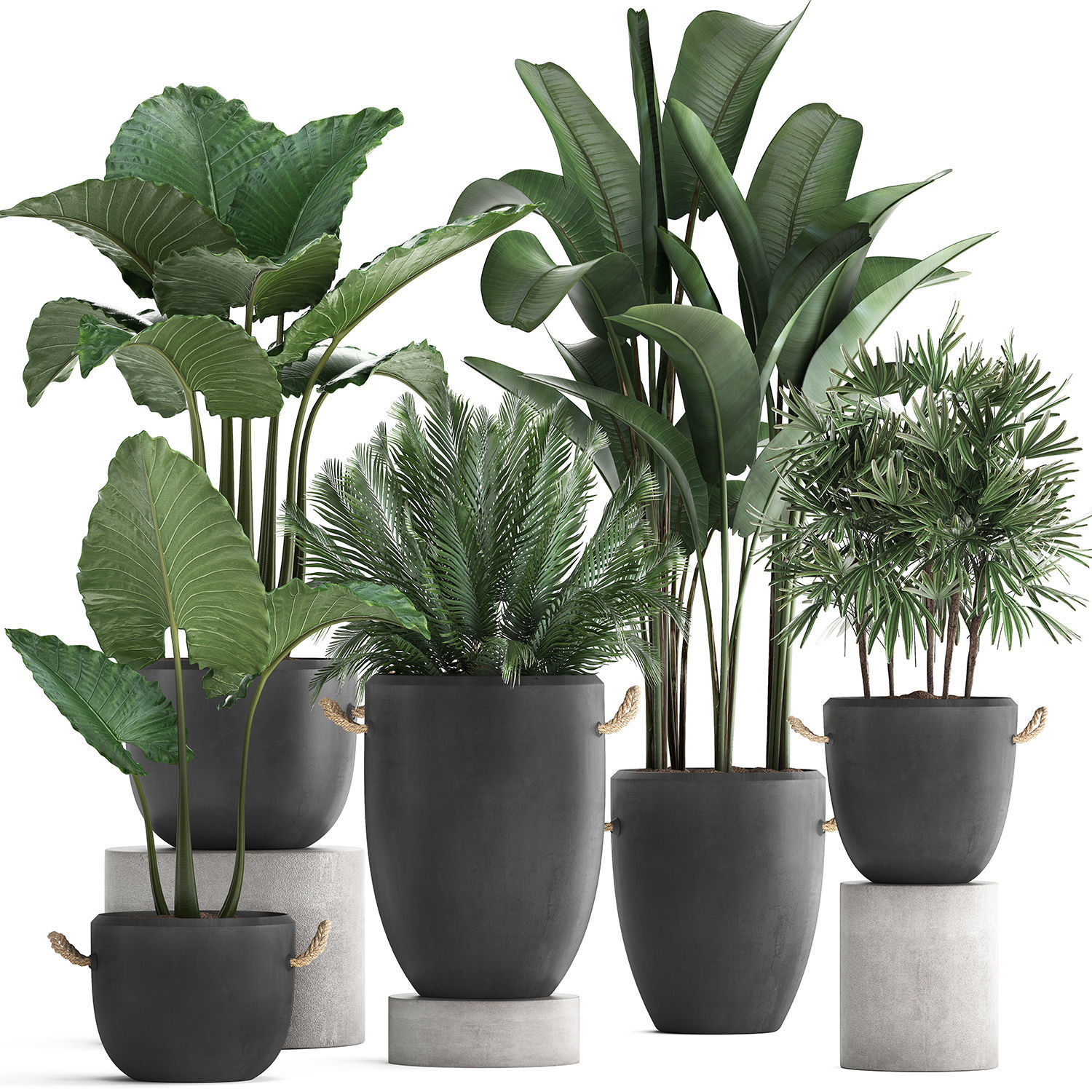Collection of exotic palm trees in concrete pots 415
