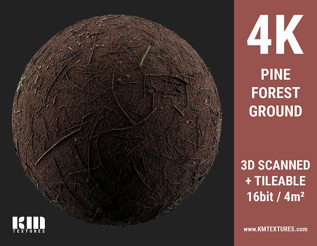 3D Scanned 4K Pine Forest Ground