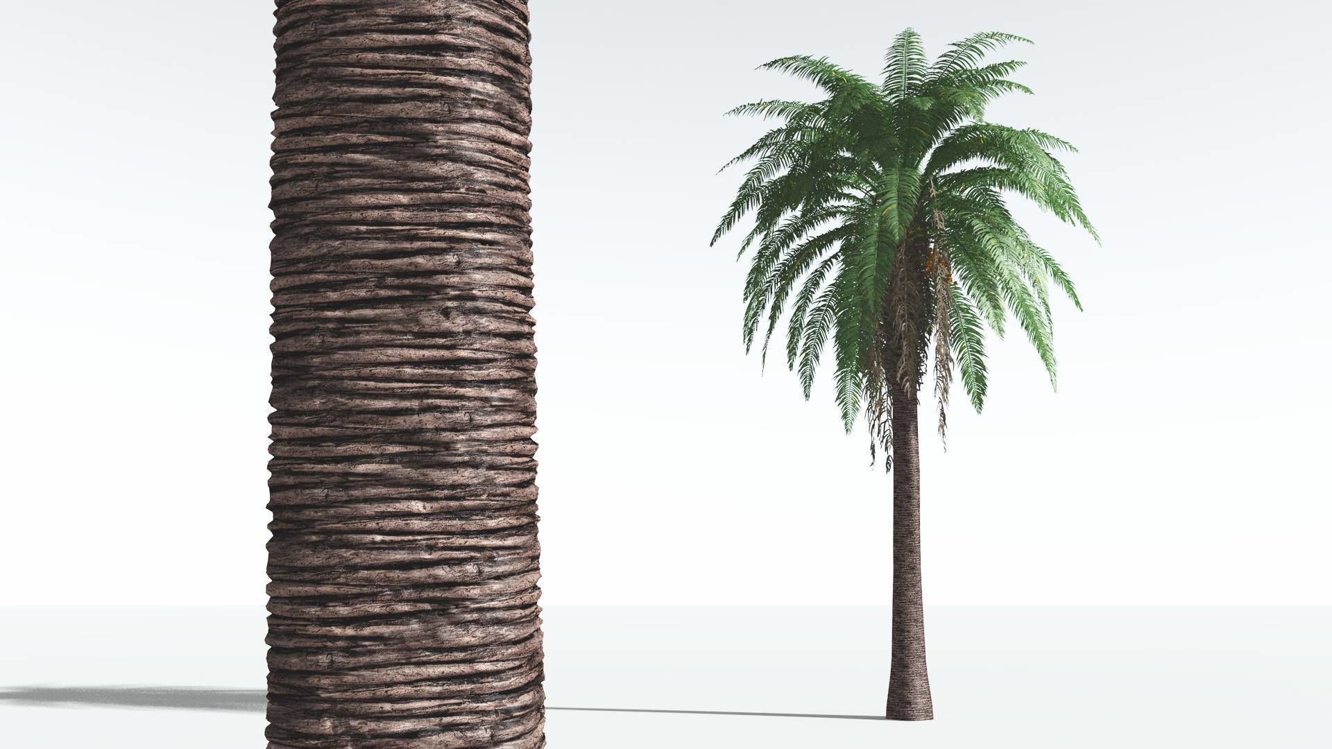 EVERYPlant Date Palm 03 --16 Models--
