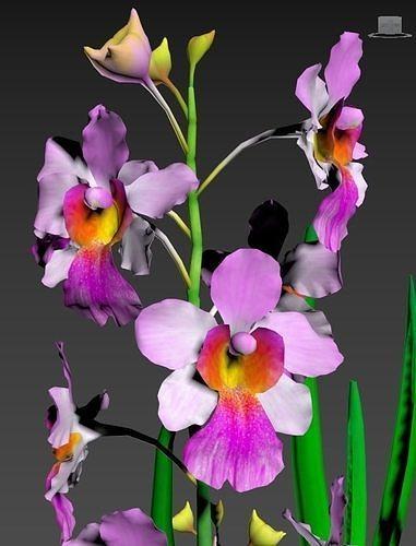 Flower MissJoanquim