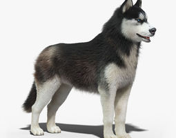 Siberian Husky FUR 3D Model