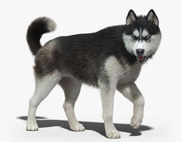 Siberian Husky FUR RIGGED 3D Model