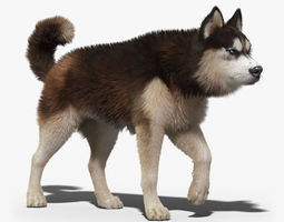 Siberian Husky 2 FUR ANIMATED 3D Model